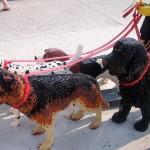 lego-dogs-orlando-2